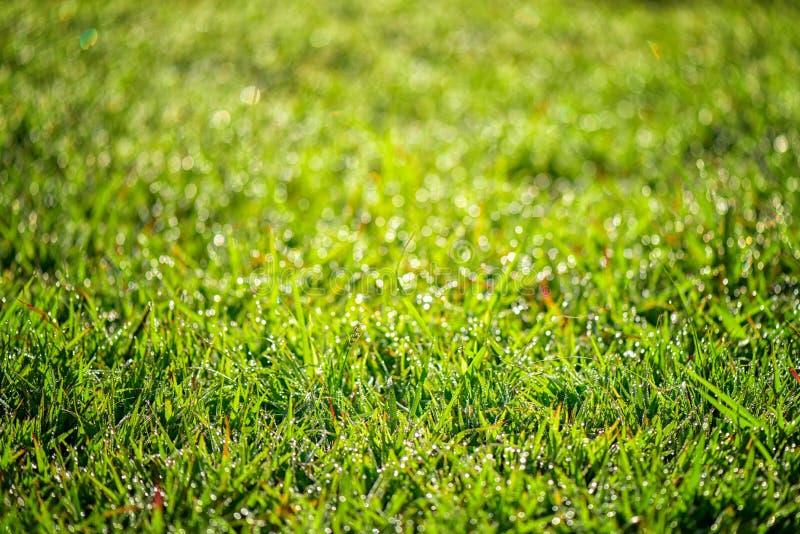 Close-up groen gras en onscherpe achtergrond stock foto's