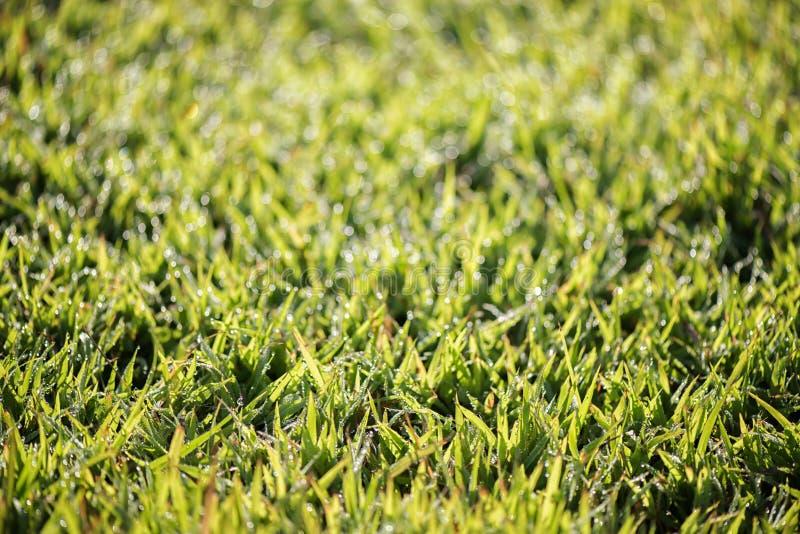 Close-up groen gras en onscherpe achtergrond royalty-vrije stock afbeelding