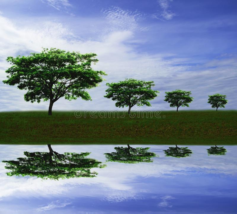 Nature landscape, rain Tree or East Indian walnut or silk tree against blue sky background in countryside with water reflection. Close up group of green tree stock image