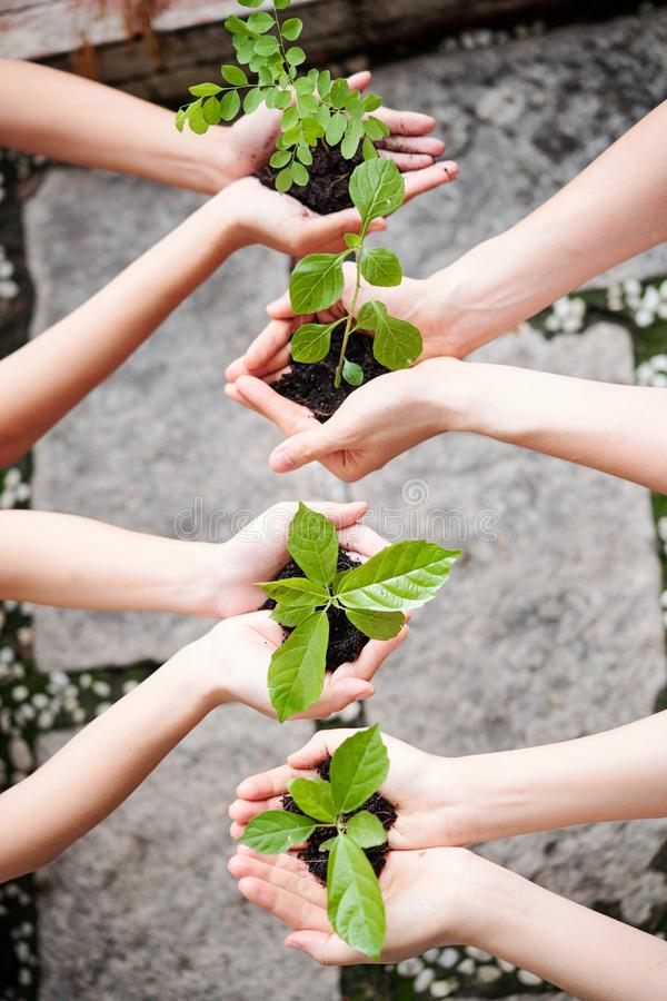 People plant young trees. Close-up of group of young people holding young trees with soil in their hands and they are going to plant them stock image