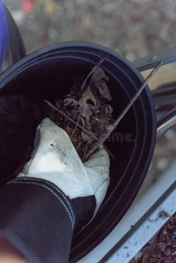Close-up hand with gloves drop dried leaves and dirt into bucket from gutter cleaning. Top view man hand in gloves holding dried leaves and dirt from gutter and royalty free stock images