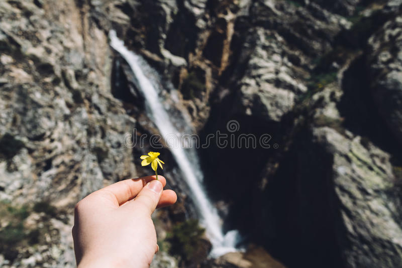 Close-Up Of Hand Holding flower against waterfall in nature. Focus on foreground royalty free stock photos