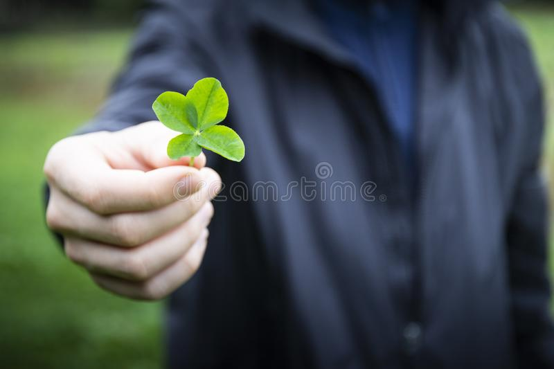 Hand holding four-leaf clover royalty free stock photography