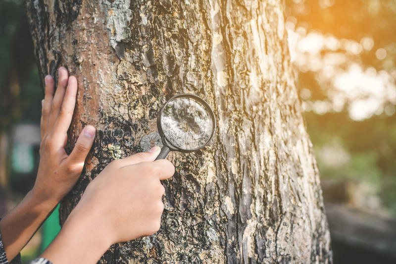 Close up hand holding magnifying glass and big tree royalty free stock images