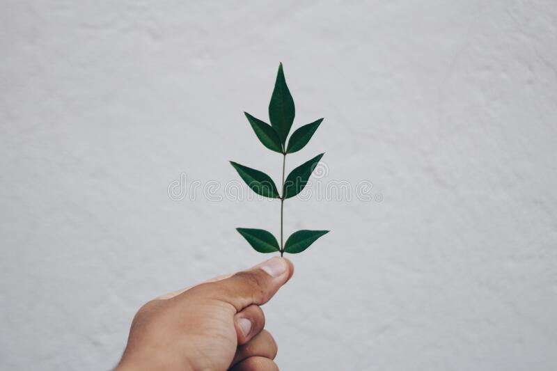 Close-up of Hand Holding Plant Against Sky royalty free stock image