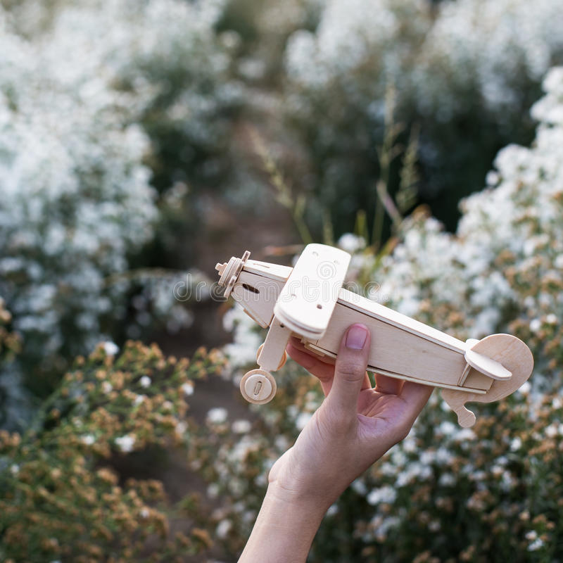 Close-up of Hand holding a wooden airplane plane on white flower.  stock image
