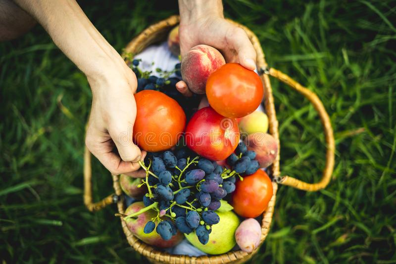 Close up hands collect fresh tomato and grapes with peaches in basket on the grass stock photography
