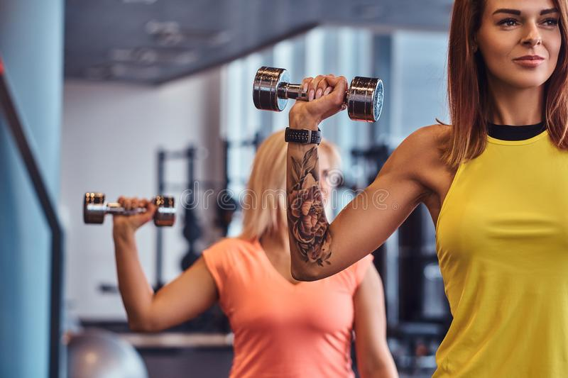 Close-up on a hands with dumbbells. Two fitness girls in sportswear doing exercises with dumbbells in the modern gym. stock image