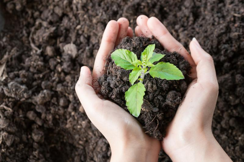 Care environment. Close up hands holding and caring green young plant, environment heal earth and save the world concept royalty free stock photography