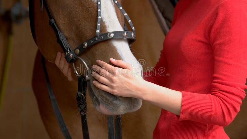 Close up hands of woman hugging a horse. stock image