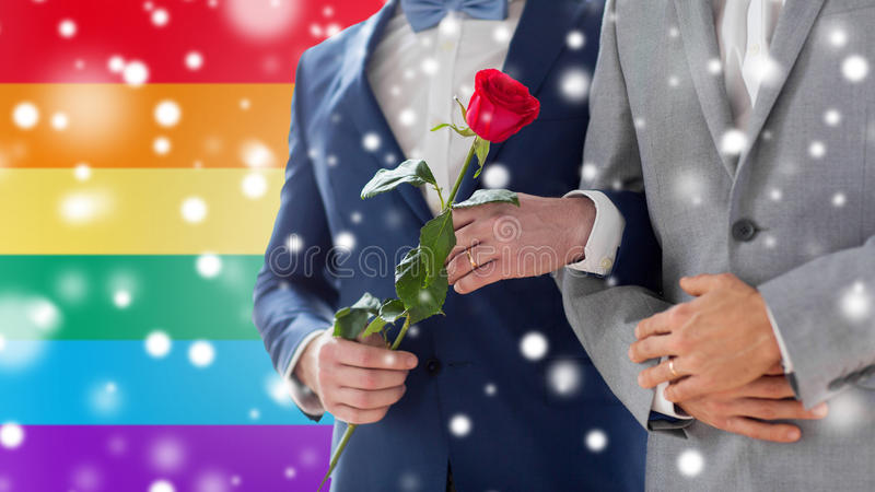 Close up of happy male gay couple holding hands. People, homosexuality, same-sex marriage and love concept - close up of happy male gay couple with red rose stock image