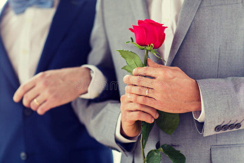 Close up of happy male gay couple holding hands. People, homosexuality, same-sex marriage and love concept - close up of happy male gay couple with red rose royalty free stock images