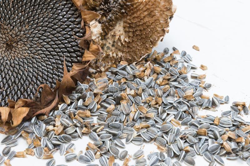 Close up harvested sunflower seeds royalty free stock photos