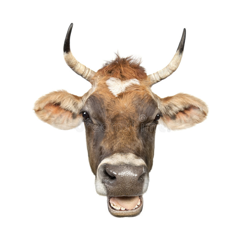 Download Close-up On A Head Of A Brown Jersey Cow Stock Photo - Image of inhaling, hoofed: 9332160