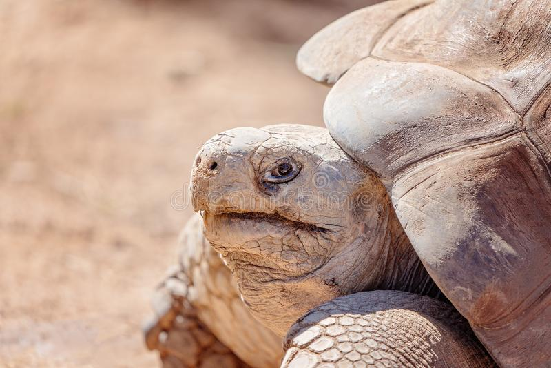 Close up of the head of a galapagos tortoise. Showing mouth, eyes and scales stock photos