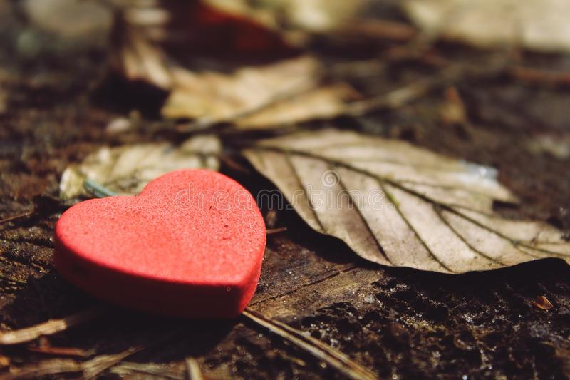 Close-up of Heart Shape stock images