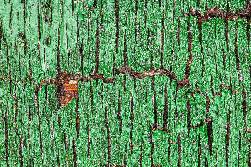 Close Up of a Heavily Weathered and Cracked Painted Wood Door. A Close Up of a Heavily Weathered and Cracked Painted Wood Door royalty free stock photography