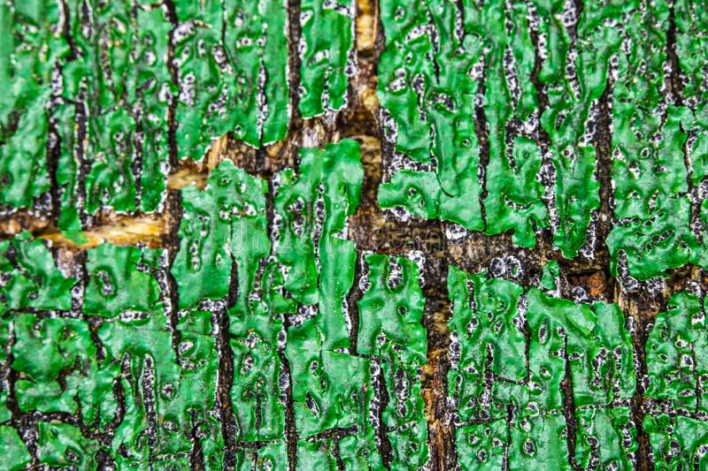 Close Up of a Heavily Weathered and Cracked Painted Wood Door. A Close Up of a Heavily Weathered and Cracked Painted Wood Door stock image