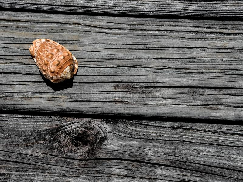 Close Up of Helmet Shell on a Weathered Dock. An isolated helmet shell lying on an old textured, weathered dock stock image