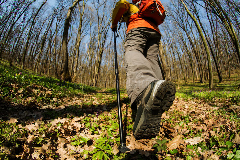 Close up of hiker shoes boots and hiking sticks poles. Hiking - Hiker walking in forest with poles. Close up of hiker shoes boots and hiking sticks poles royalty free stock photography