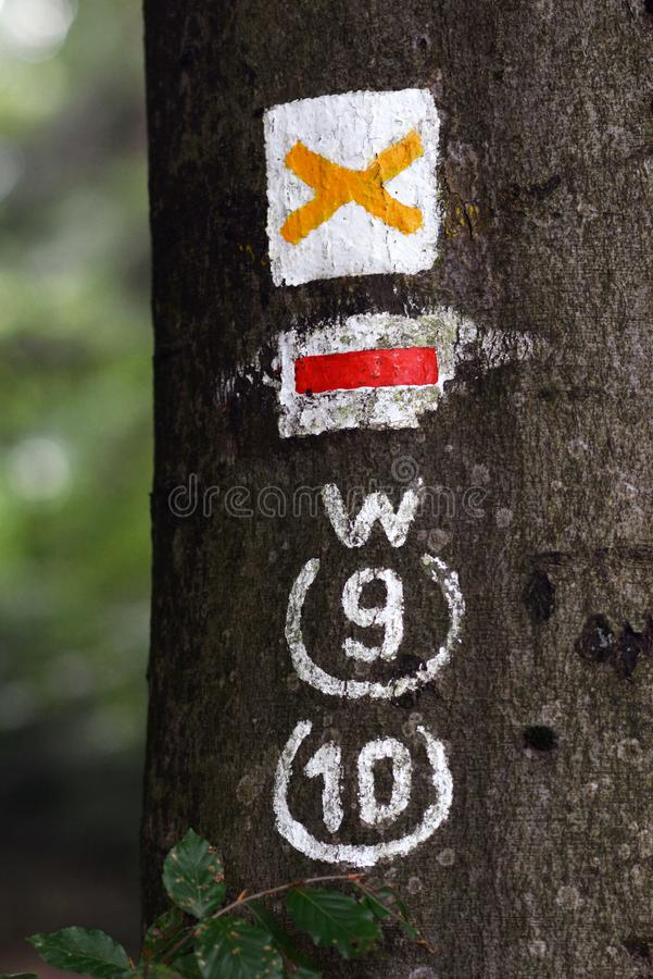 Close up of hiking trail blazing markings on tree in forest royalty free stock photo