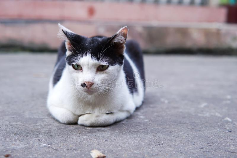 Close up of homeless cat lay in front of old building in Thailand. Lonely cat lay down on side walk. Close up of homeless cat in front of old building in stock images