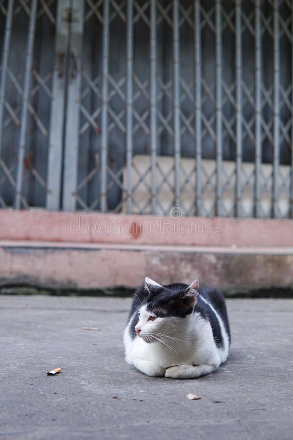 Close up of homeless cat lay in front of old building in Thailand. Lonely cat lay down on side walk. Close up of homeless cat in front of old building in royalty free stock photos