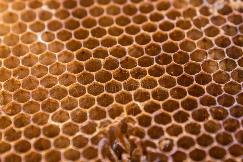 Honeycomb pattern texture background. Close up of honeycomb pattern texture background royalty free stock photos