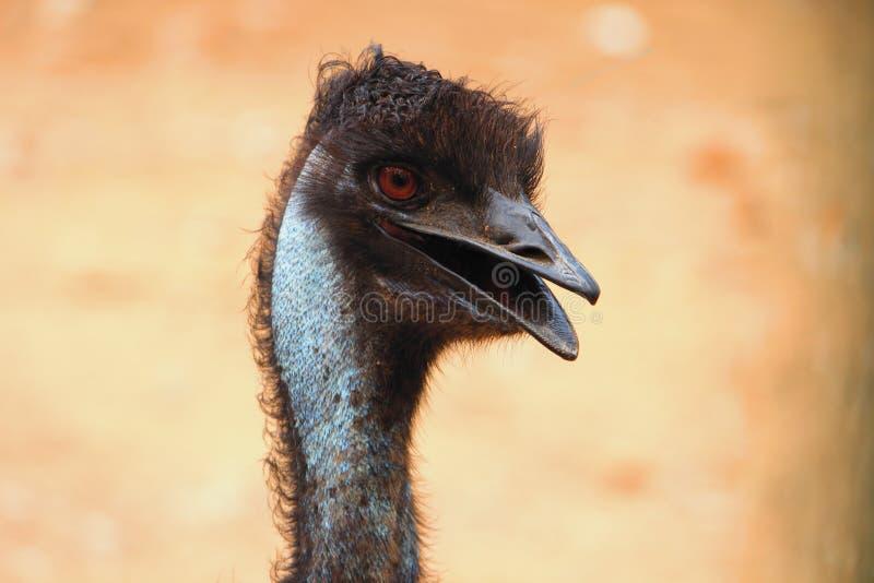Close-up Hoofd en zijaanzicht van Struisvogel royalty-vrije stock foto