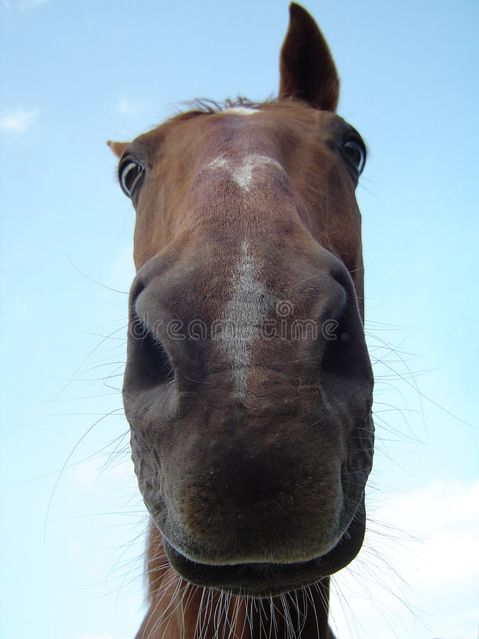 Close-up horse royalty free stock photo