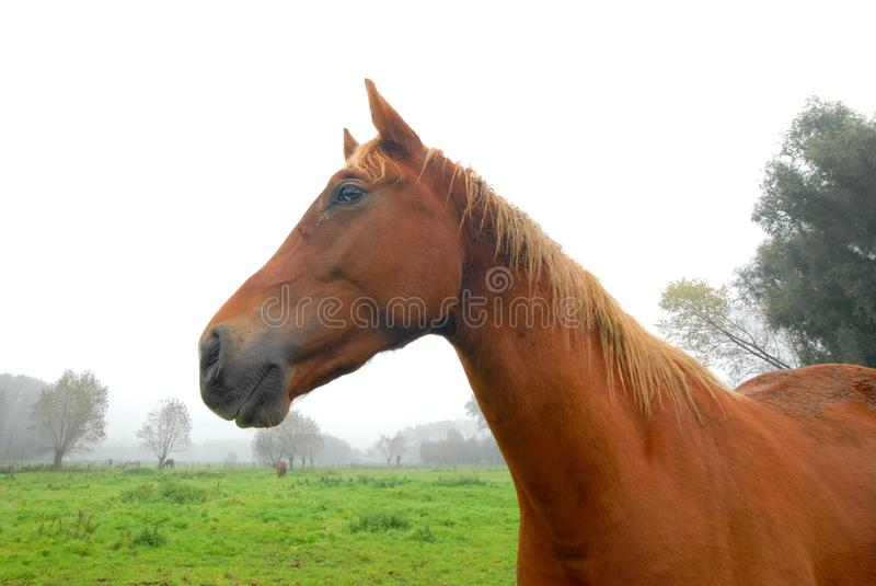 Close up of a horse stock photography