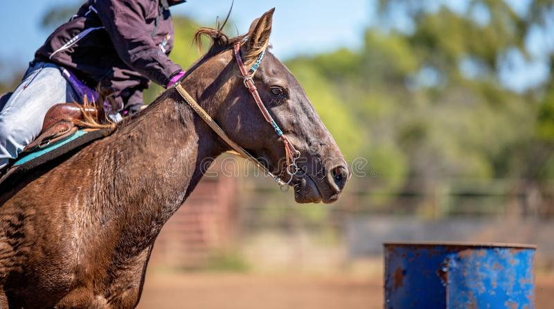 Close Up Of Horse Competing In Barrel Racing At Outback Country Rodeo stock photography