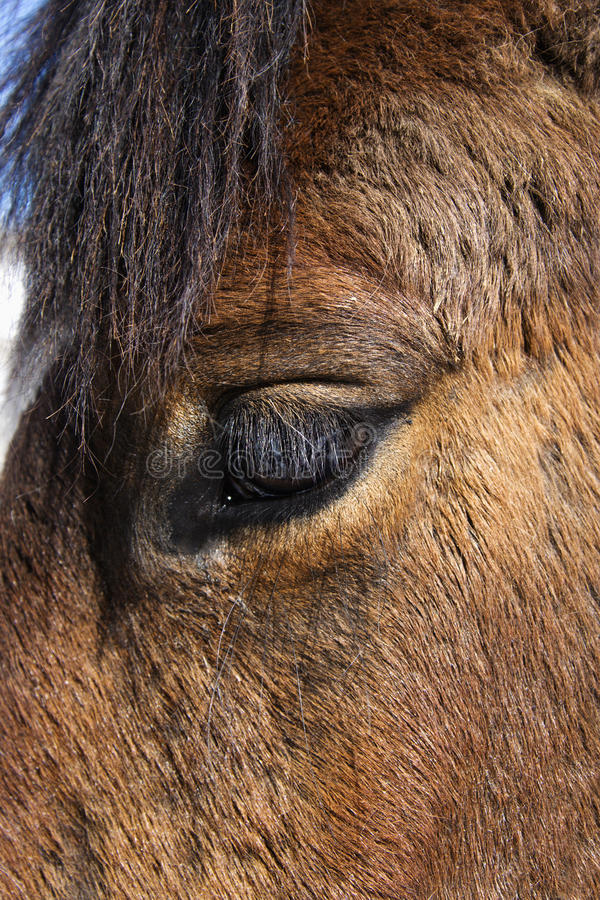 Download Close-up of Horse Eye stock image. Image of close, horse - 12986129
