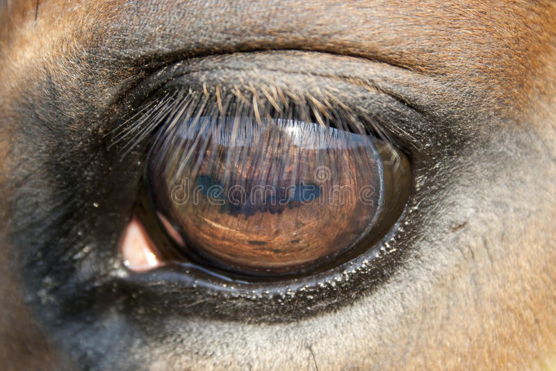 Close up of a horse eye. Almost surreal details inside of the eye. very shallow field of depth royalty free stock photography