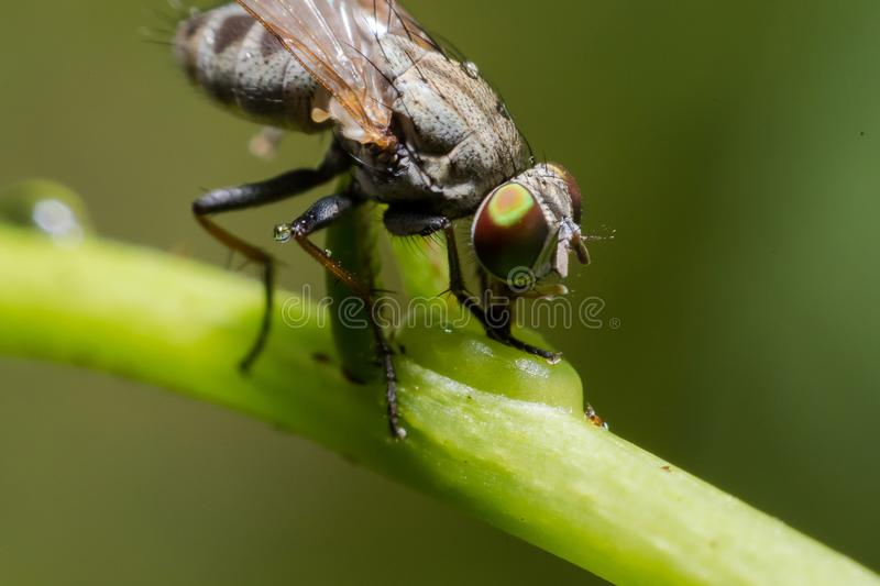 Close up of Housefly on a leaf green stock photo