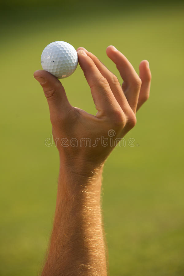 Close-up of human hand holding golf ball royalty free stock image