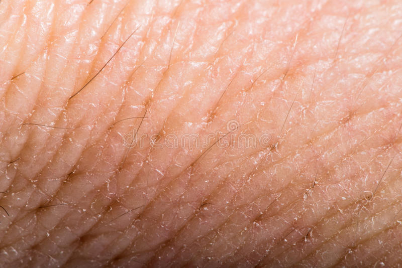 up human skin macro epidermis stock photo image 36429598 up human skin macro epidermis stock photo image 36429598