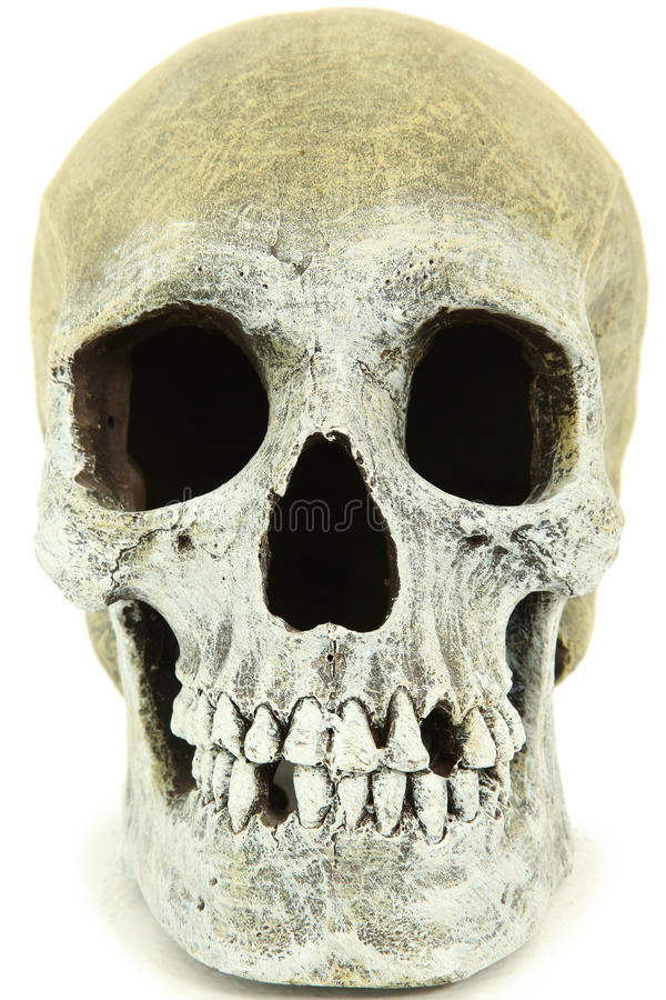 Download Close Up Of Human Skull Stock Photography - Image: 24433642