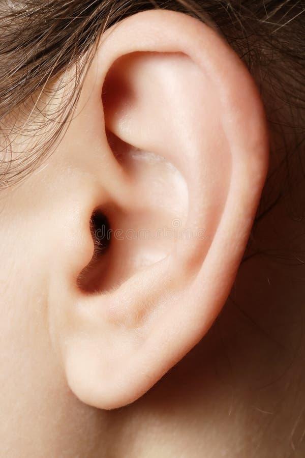 Close up humano da orelha fotos de stock royalty free