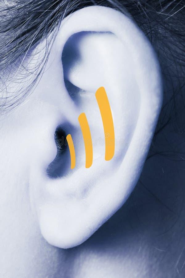 Close up humano da orelha foto de stock royalty free