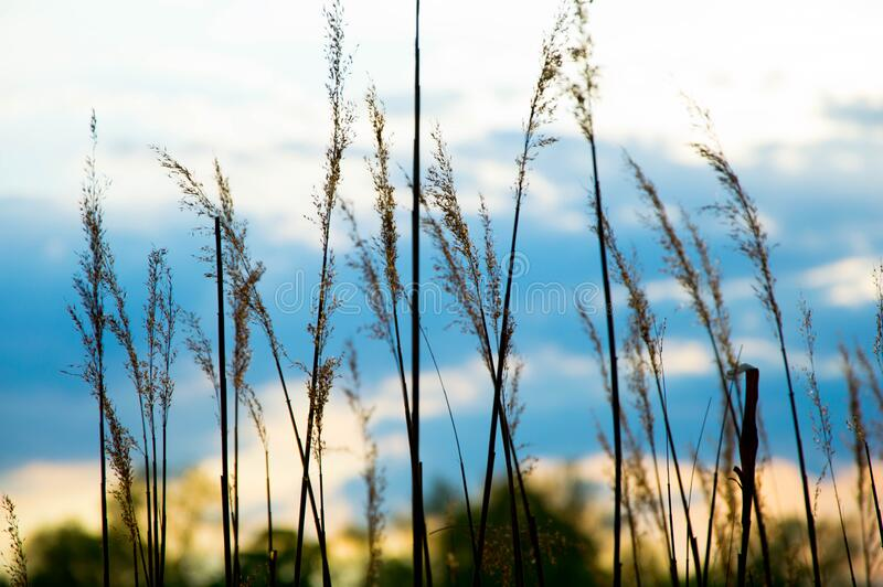 Close Up Image Of Grass During Daytime Free Public Domain Cc0 Image