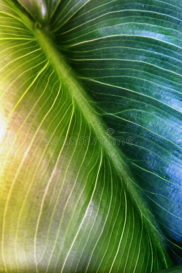 Close up image of green leaf pattern and detail stock image