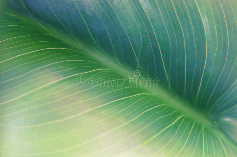 Close up image of green leaf pattern and detail.  royalty free stock photo