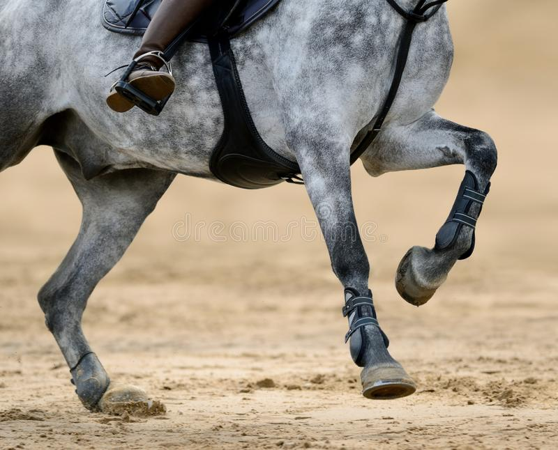 Close up image of legs of horse on show jumping competition. Close up image of legs of running gray horse on show jumping competition stock photo