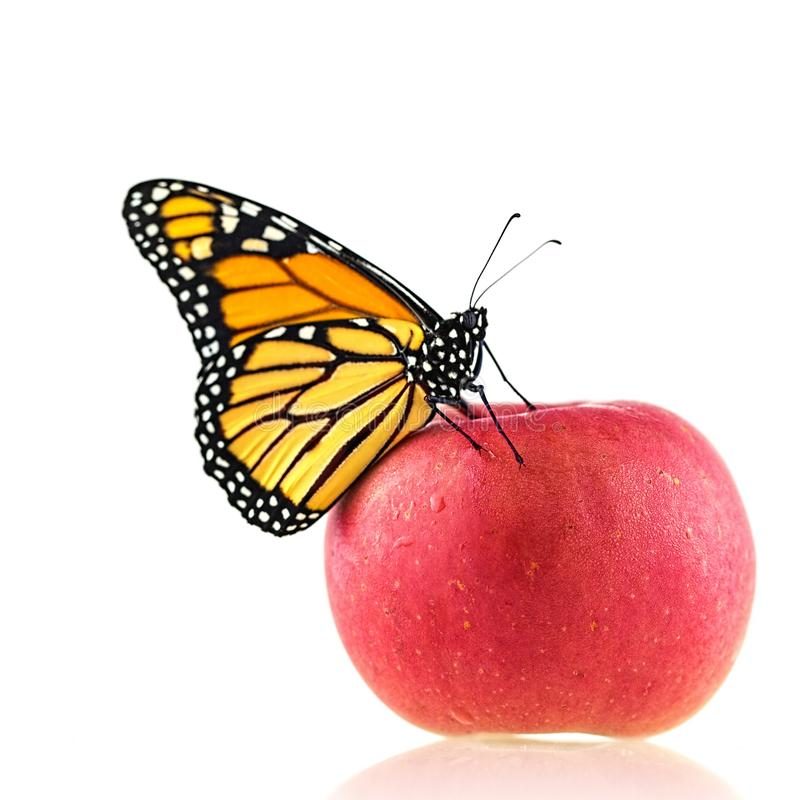 A Monarch Butterfly On An Apple stock photos