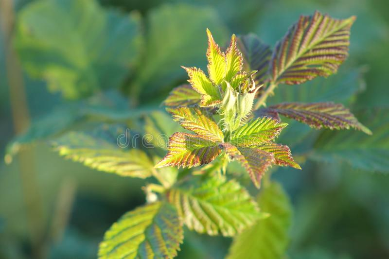 Close up image of new plant growth stock photo