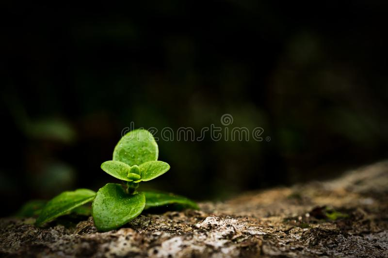 Close up image of small green plant growing on trunk in forest. Macro image of small green plant growing on trunk in forest. Represent to earth day, start new stock photo