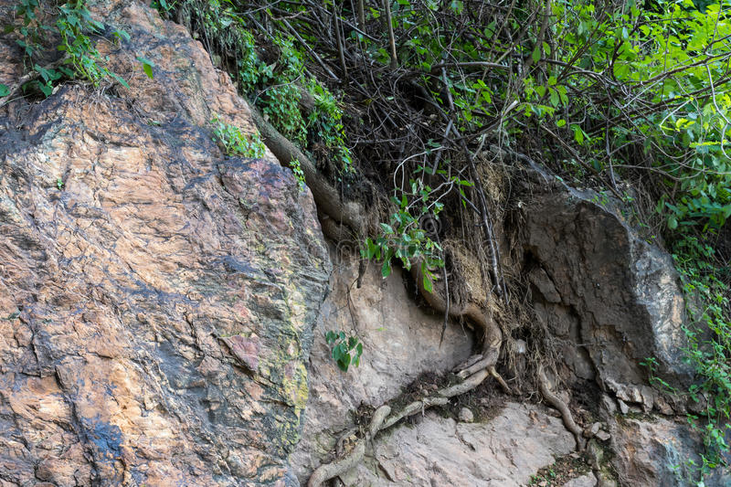 Surface rocky cliffs with weeds. royalty free stock photography