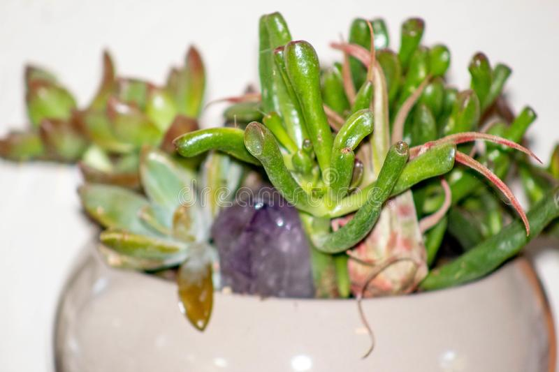 Close-up of indoor potted succulents and an air plant royalty free stock image