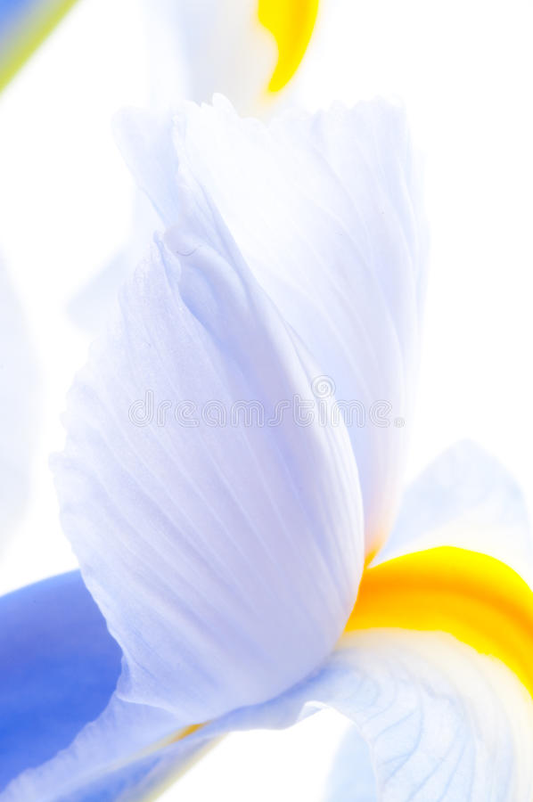 Close up of Iris petal. Background, beautiful, bloom stock photography